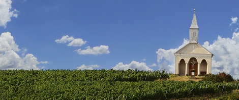 Nachbil Vineyard